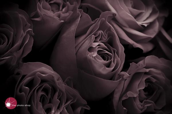Yuko's roses