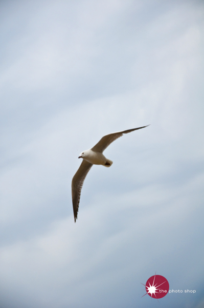 A seagull flying over St Kilda Beach