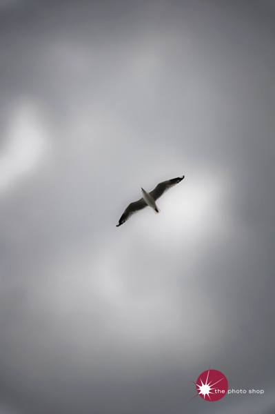 Seagull overhead at St Kilda Beach